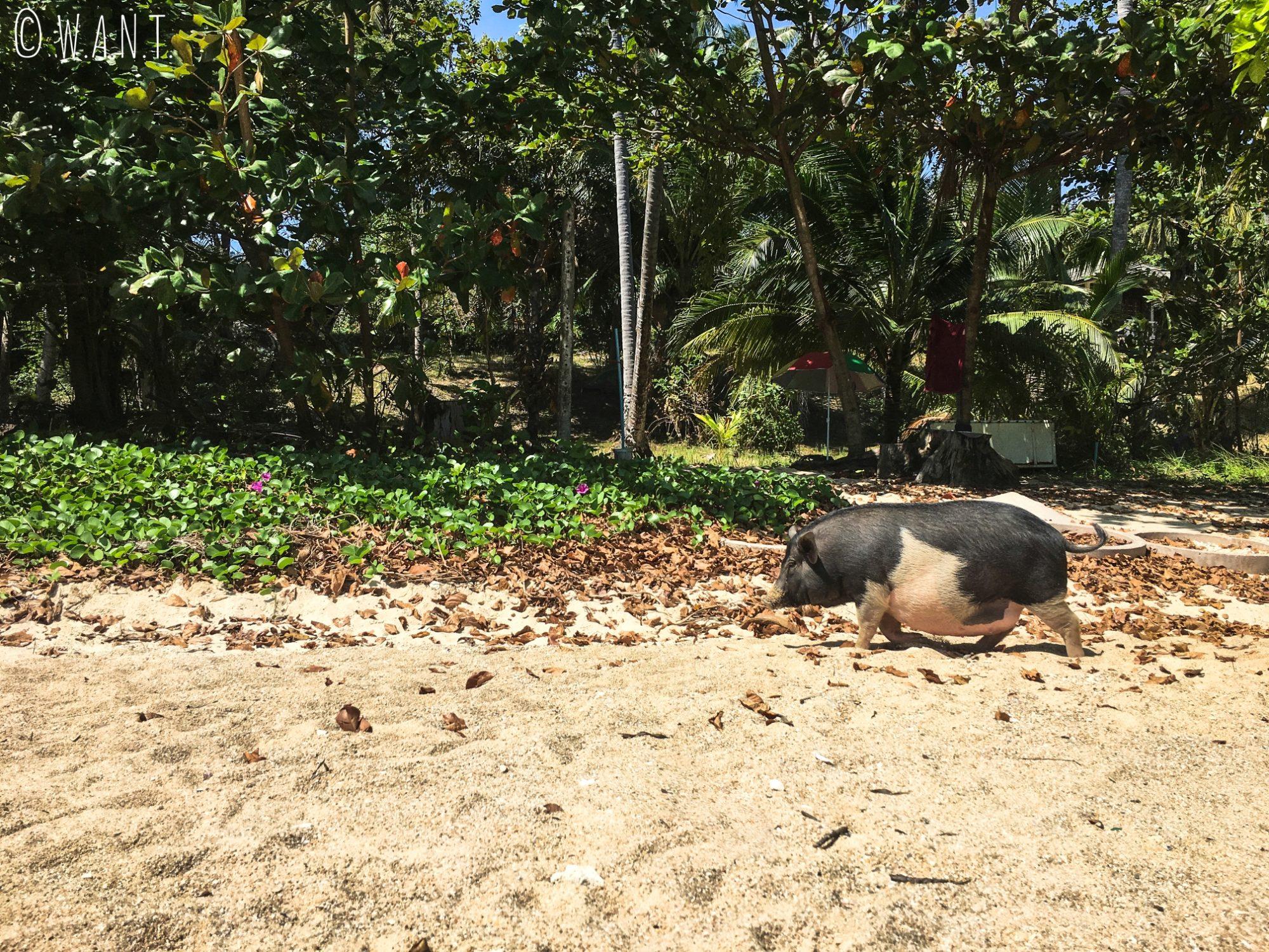 Nous ne sommes pas seuls sur la plage de Laem Ka Beach de Phuket