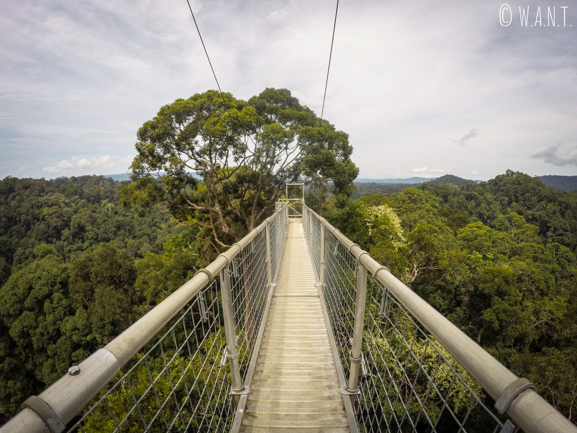 Pont suspendu au-dessus de la canopée du Parc national Ulu Temburong au Brunei