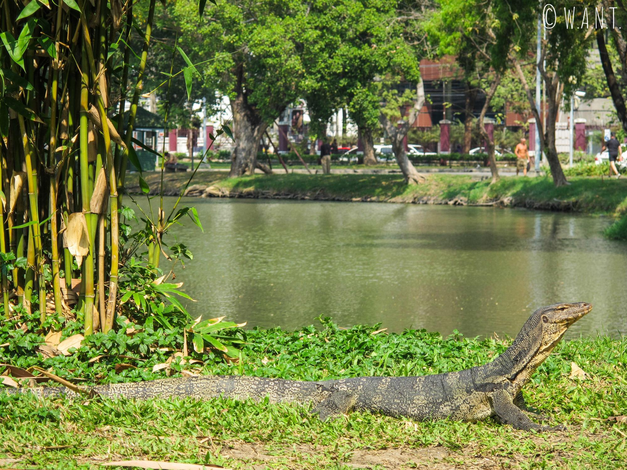 Varan dans le parc de Lumphini de Bangkok