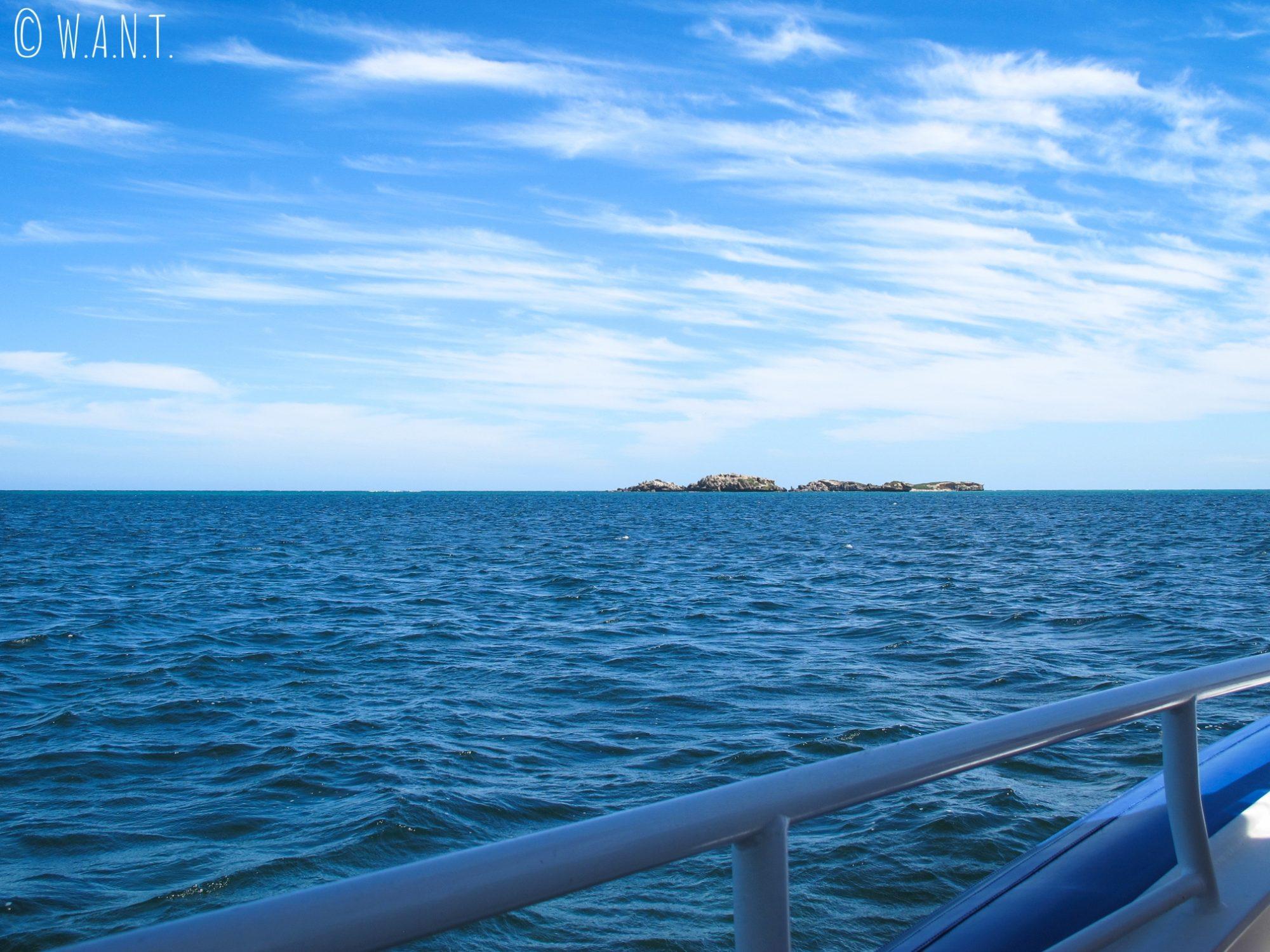 À bord du bateau pour la croisière Dolphin, Penguin & Sea Lion Cruise à Penguin Island