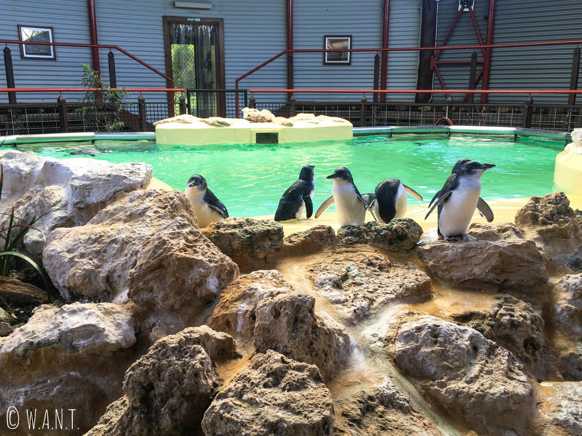 Bassin et pingouins sur Penguin Island