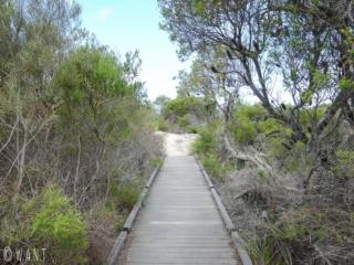 Chemin de la randonnée Manly Scenic Walkway près de Sydney