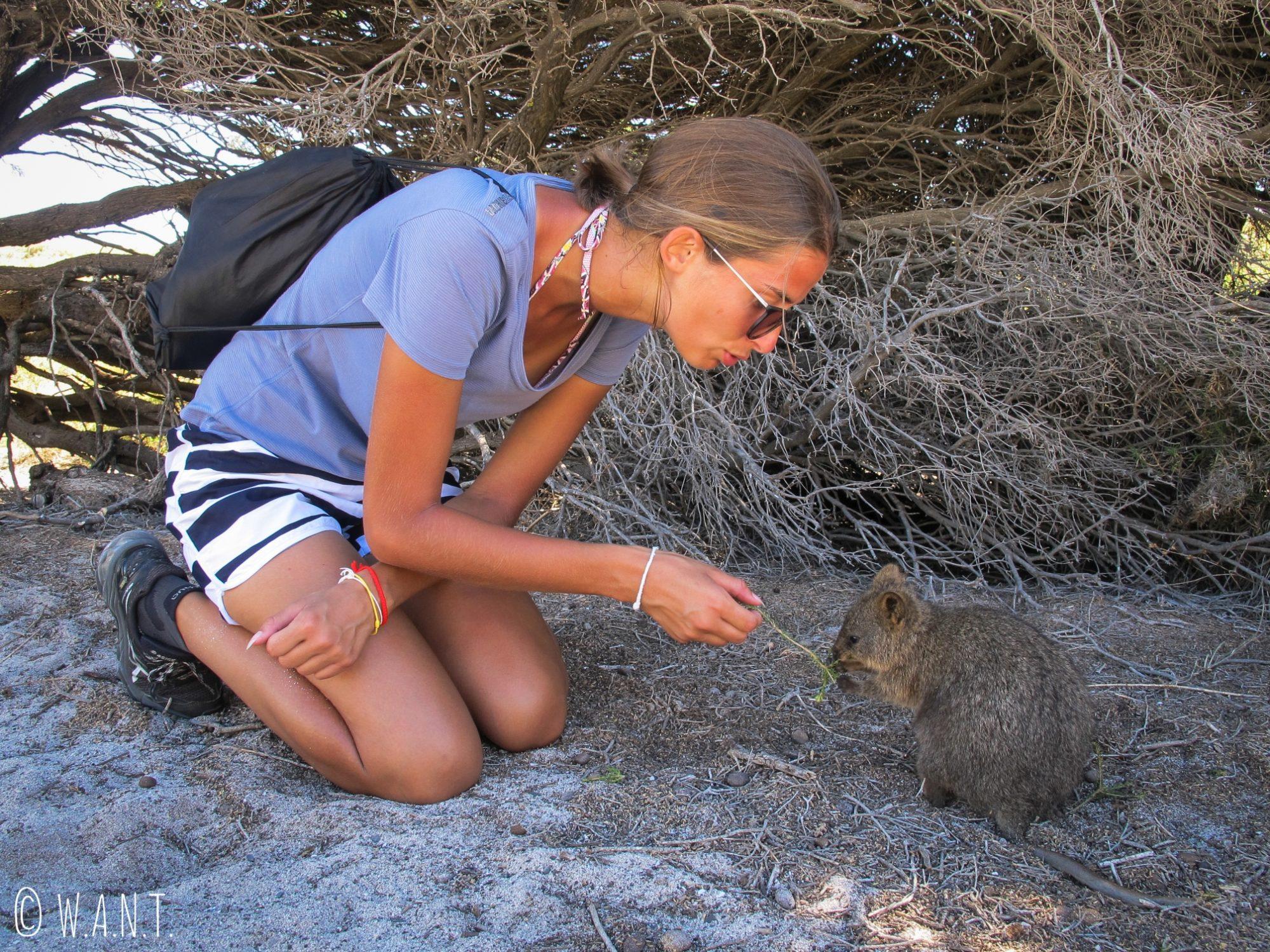 Marion et un quokka sur Rottnest Island