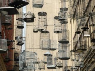 Oeuvre d'art en hommage aux oiseaux disparus dans les rues de Sydney