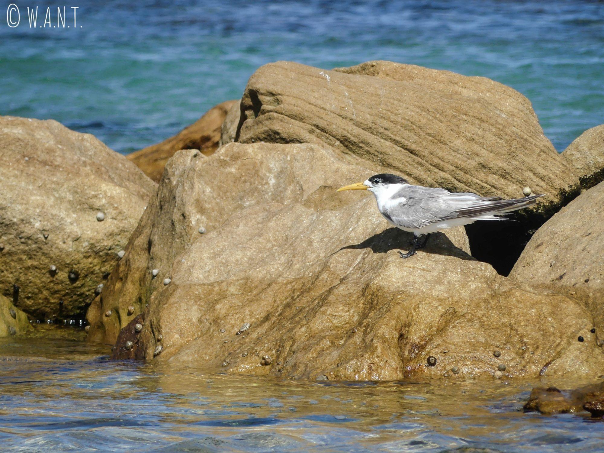 Oiseau sur la plage de Maroubra près de Sydney