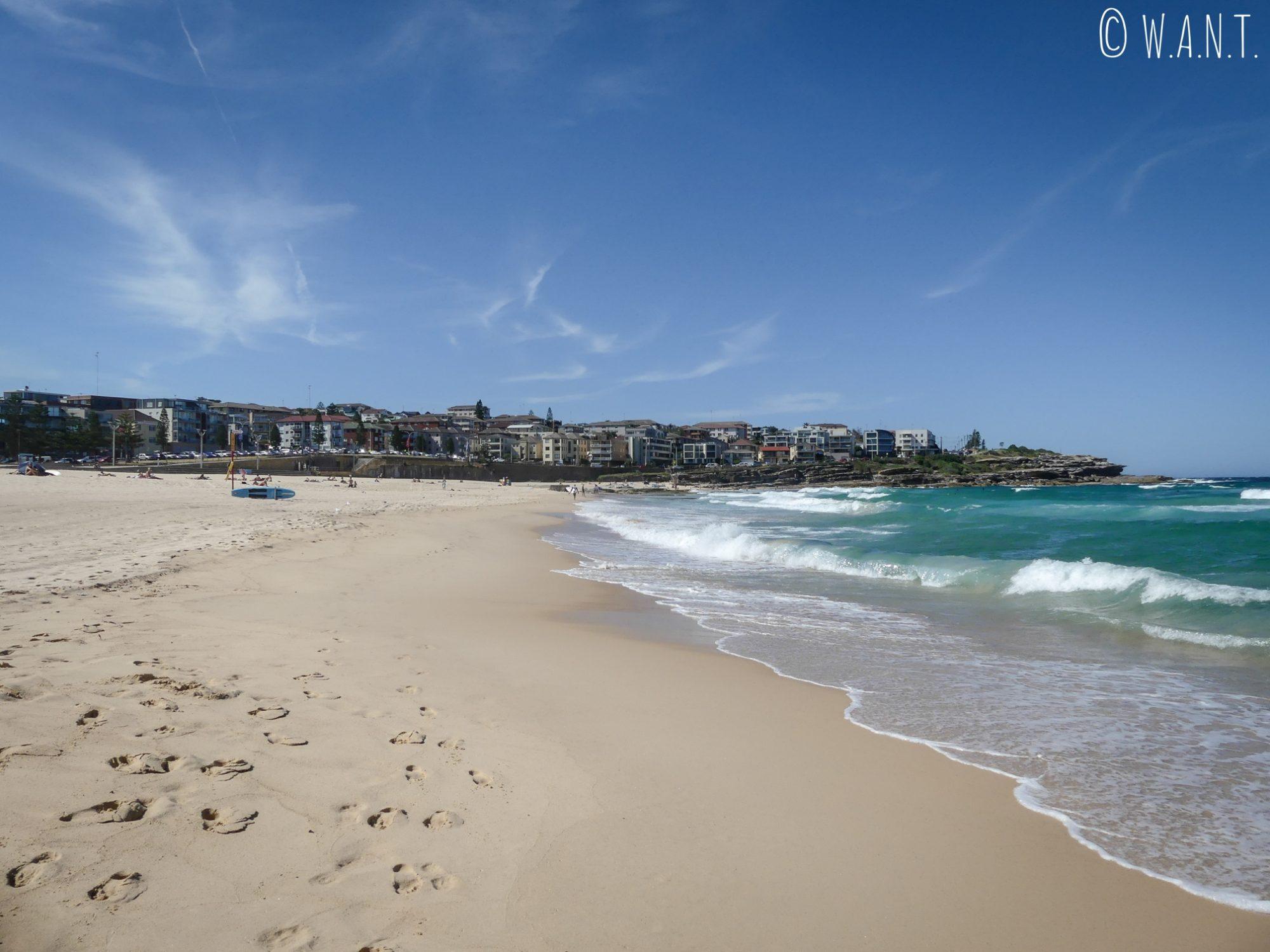 Superbe plage de Maroubra près de Sydney