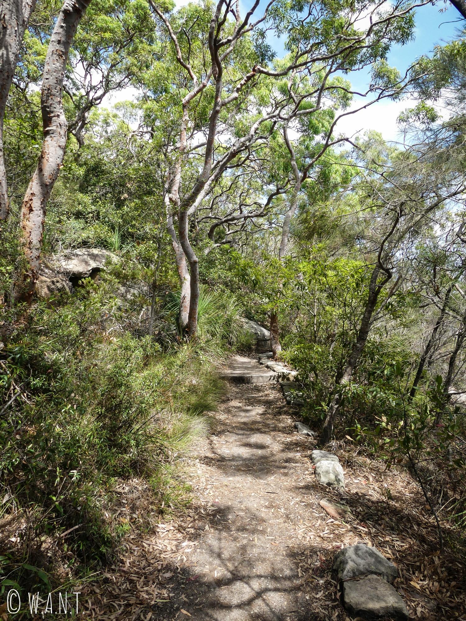 Une partie de la randonnée Manly Scenic Walkway nous fait passer à travers la végétation
