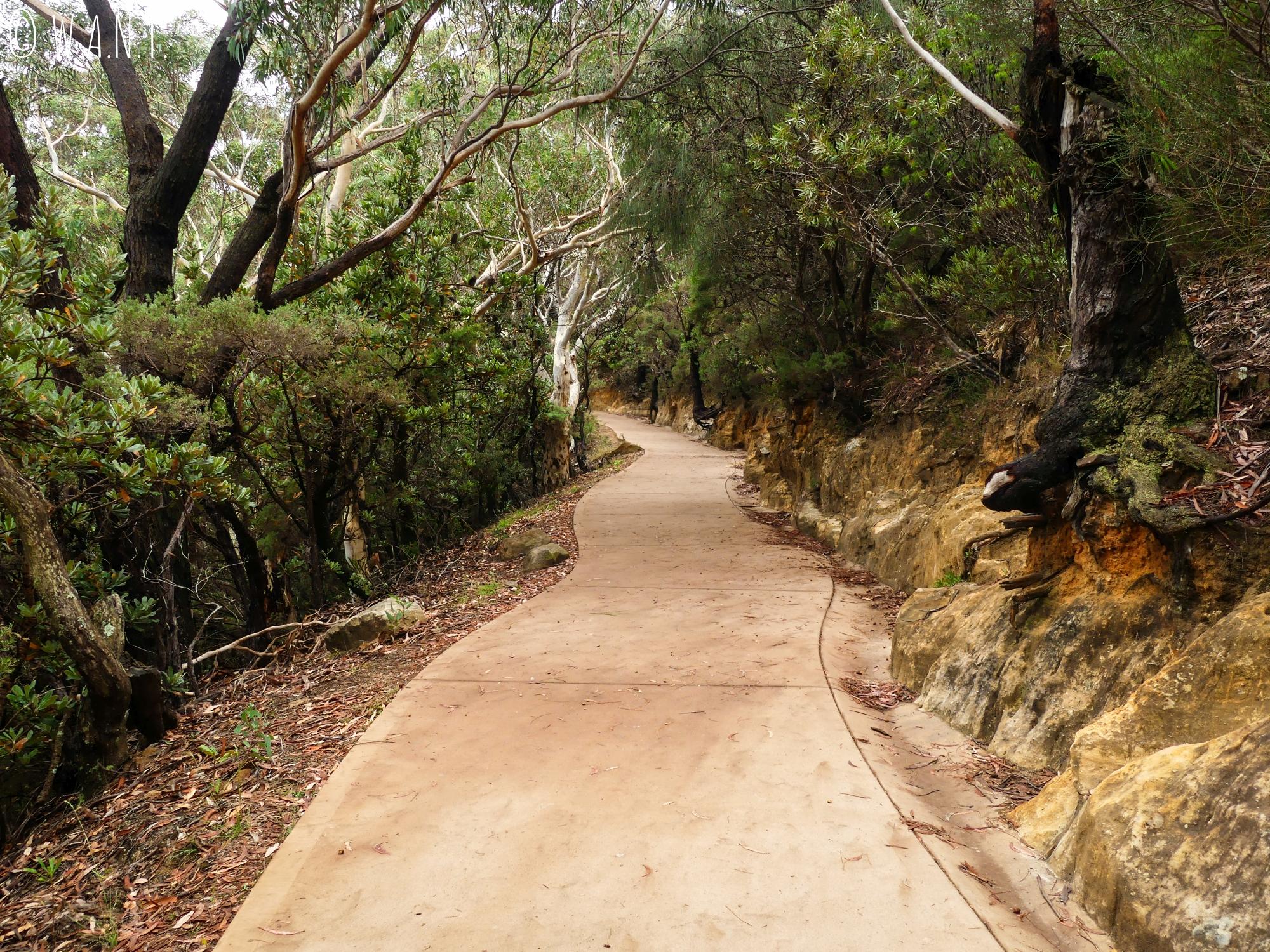 Chemin de trail du Prince Henry Cliff Walk, dans les Blue Mountains