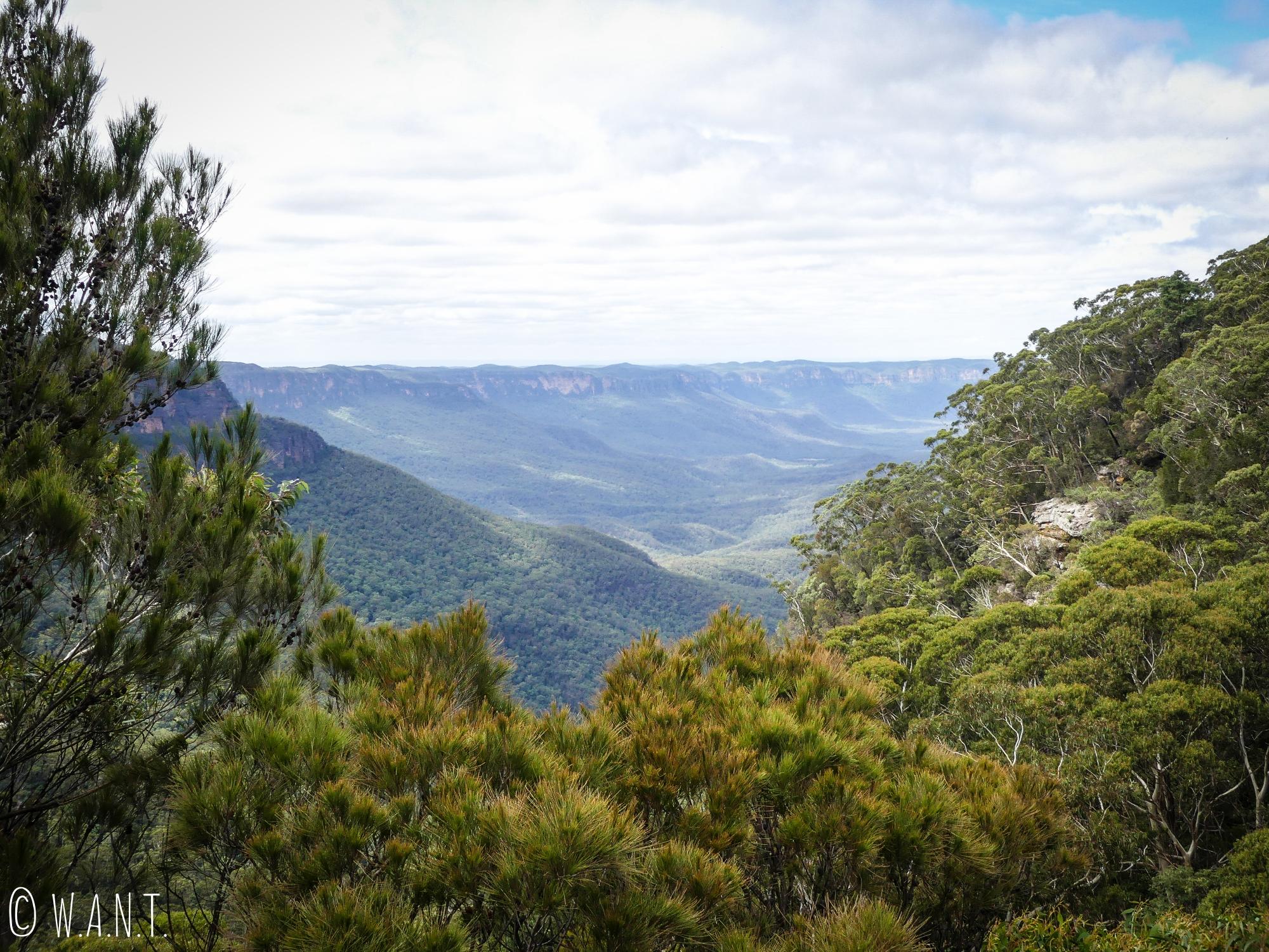 Dégradé de verts des forêts d'eucalyptus dans le parc national des Blue Moutains
