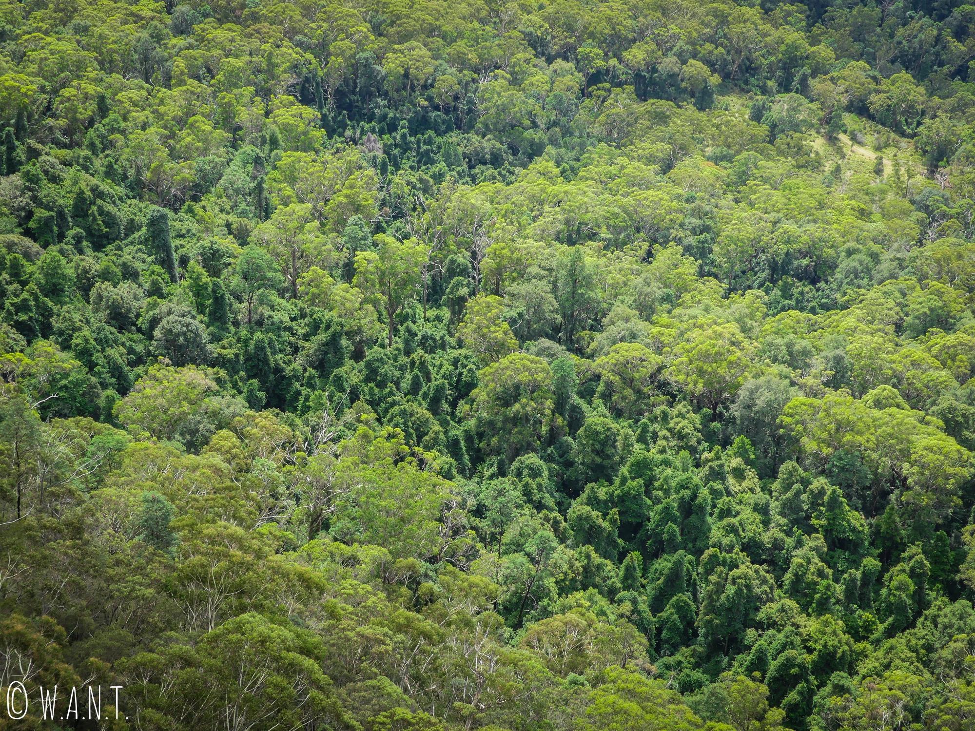 Forêts d'eucalyptus à perte de vue dans le parc national des Blue Mountains
