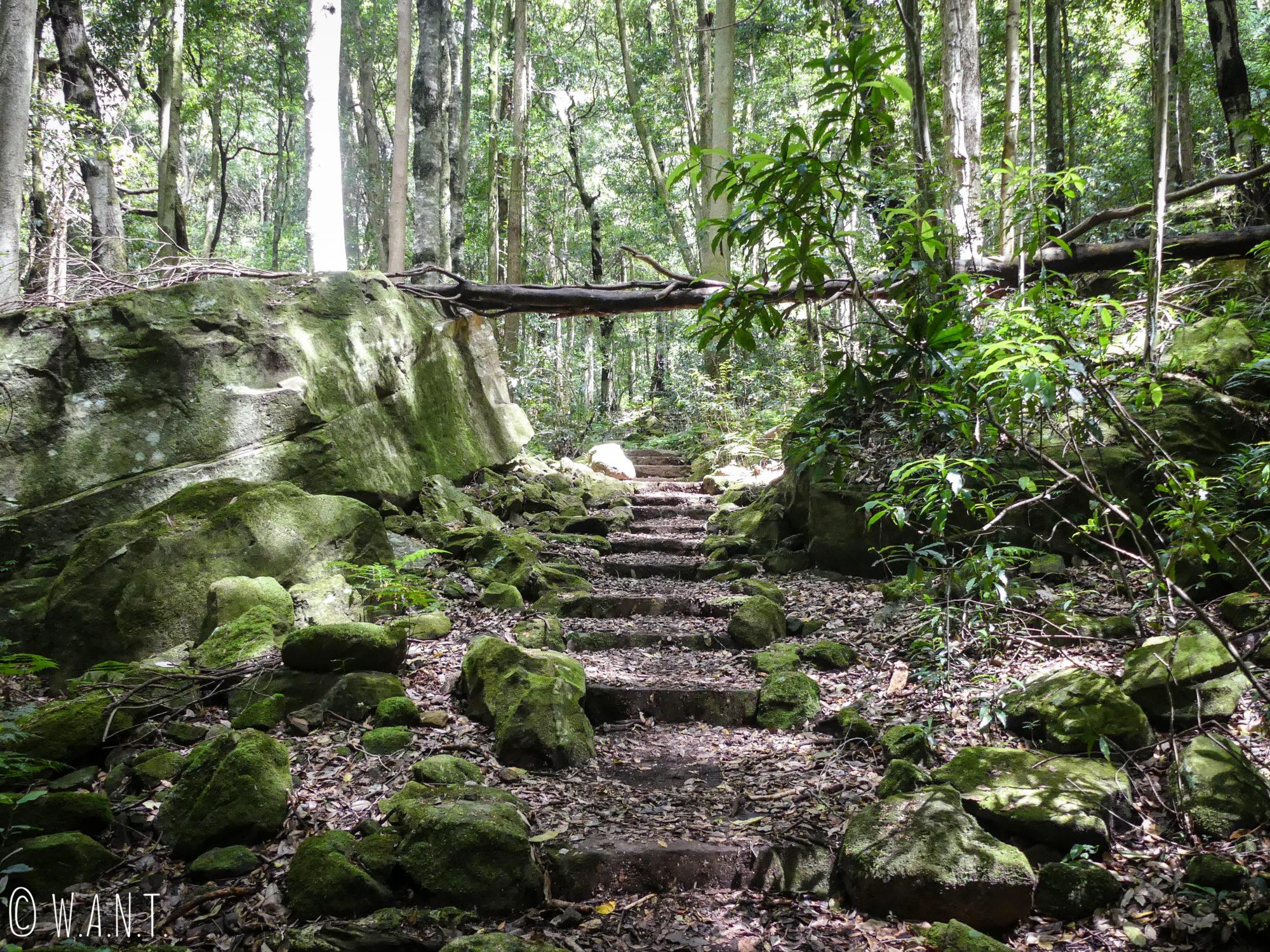 La nature omniprésente sur les chemins de randonnée du Parc National des Blue Mountains
