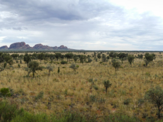 Panorama depuis le point de vue Kata Tjuta Dune Viewing