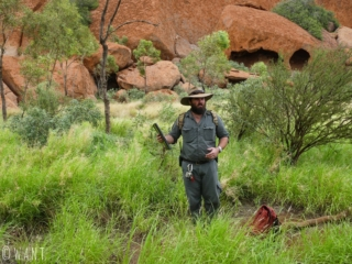 Tour gratuit avec un ranger au parc Uluru-Ayers Rock