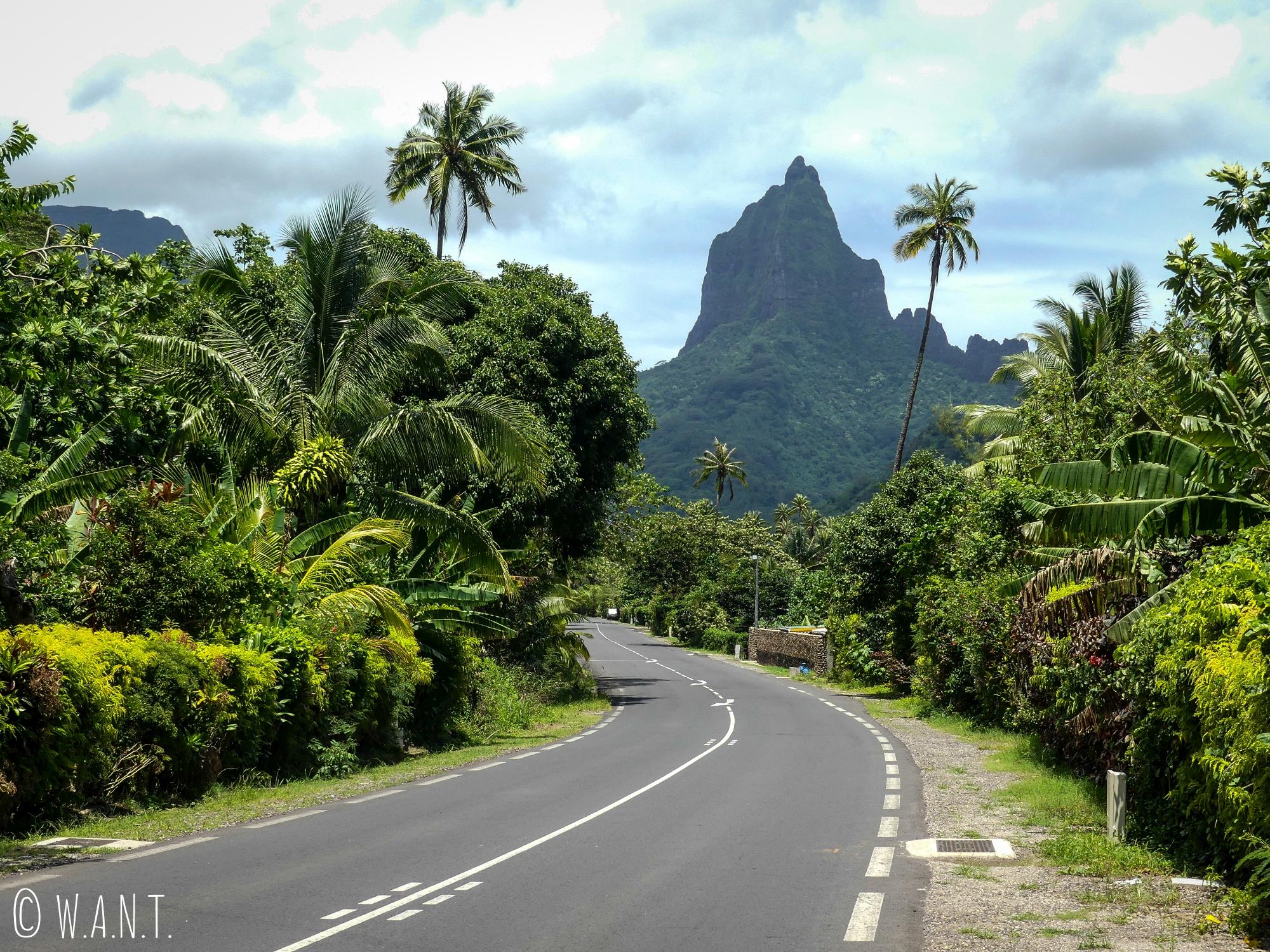La route jouxte les pitons rocheux sur l'île de Moorea