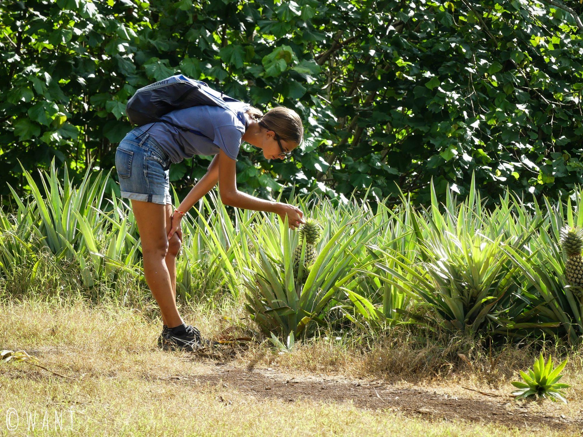 Marion devant un champs d'ananas sur le chemin du Belvédère de l'île de Moorea