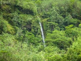 Nature verdoyante dans la vallée de la Papenoo sur l'île de Tahiti