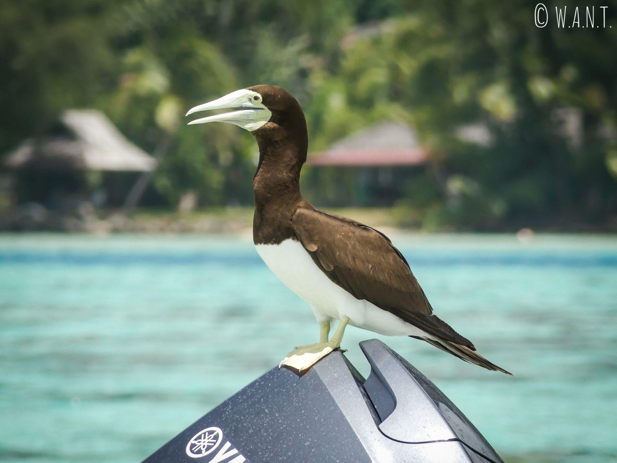 Un oiseau curieux s'est posé sur le bateau au fond de verre de Capitaine Taina, sur l'île de Moorea