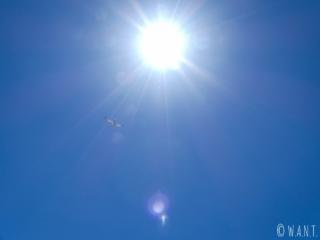 Une mouette dans le ciel bleu qui accompagne la traversée de Tahiti à Moorea
