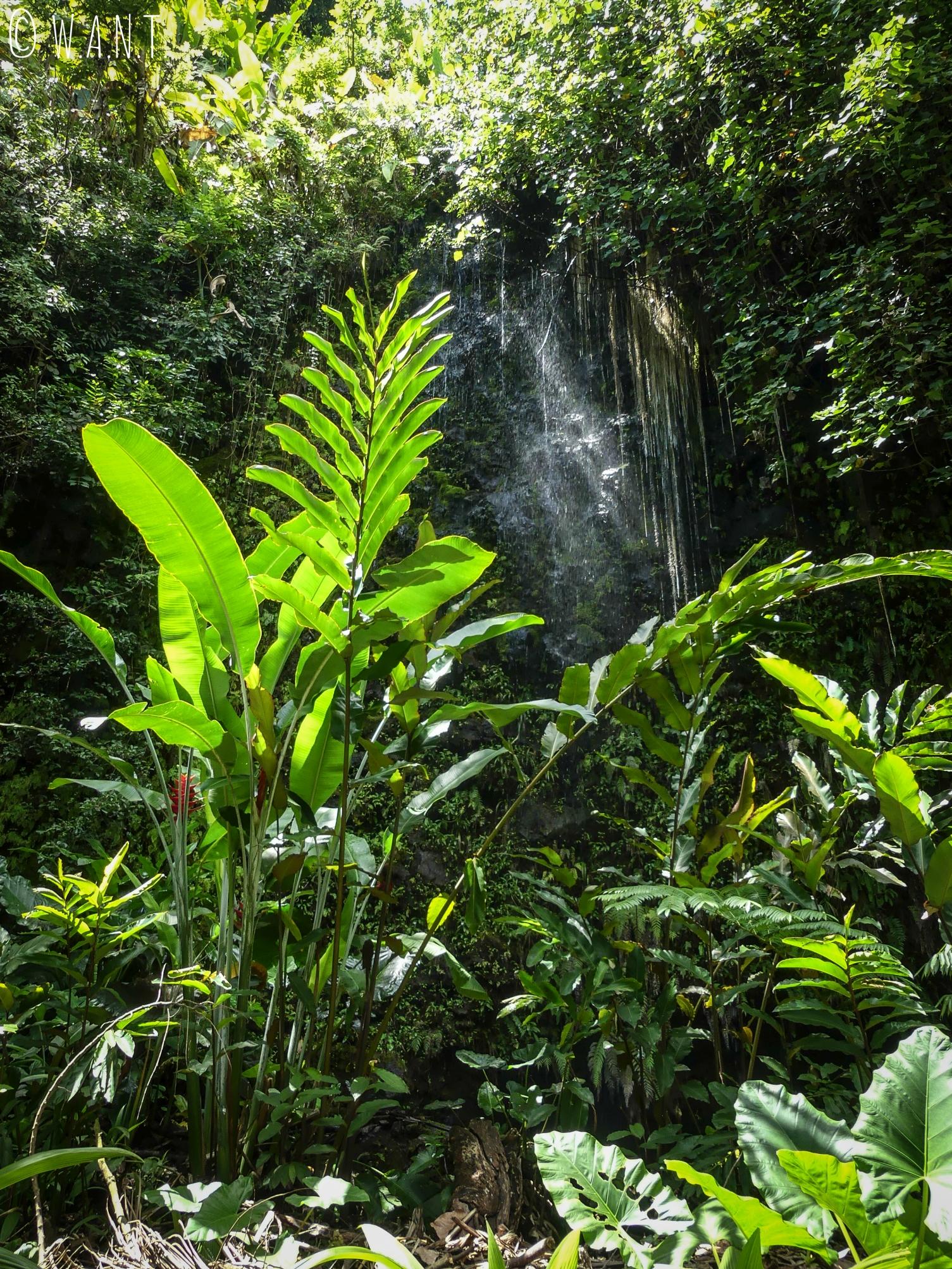 Végétation autour des grottes de Maraa à Tahiti