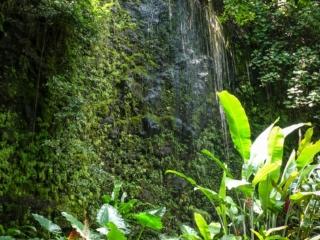 Végétation et cascade aux grottes de Maraa sur Tahiti