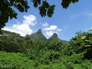 Vue sur les pitons rocheux sur l'île de Moorea