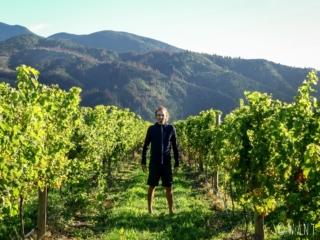 Benjamin est ravi de se promener à travers les vignes dans la région de Malborough Sounds en Nouvelle-Zélande