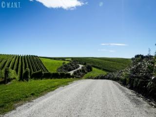 La White Road permet de conduire à travers le domaine Yealands dans la région de Malborough Sounds en Nouvelle-Zélande