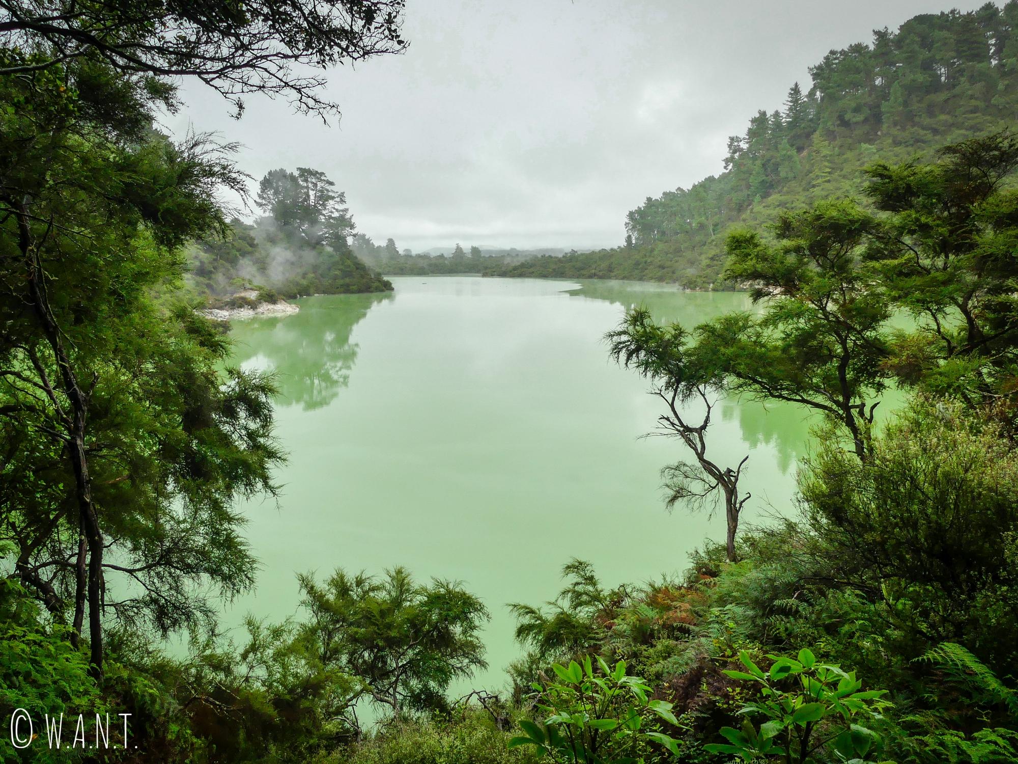 Le Lake Ngakoro a une eau de couleur verte au site de Wai-O-Tapu en Nouvelle-Zélande