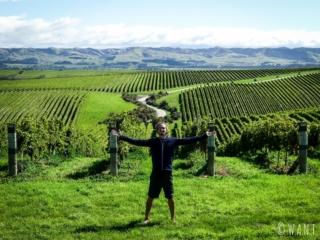 Le domaine Yealands offre un paysage incroyable au visiteur sur la région de Malborough Sounds en Nouvelle-Zélande