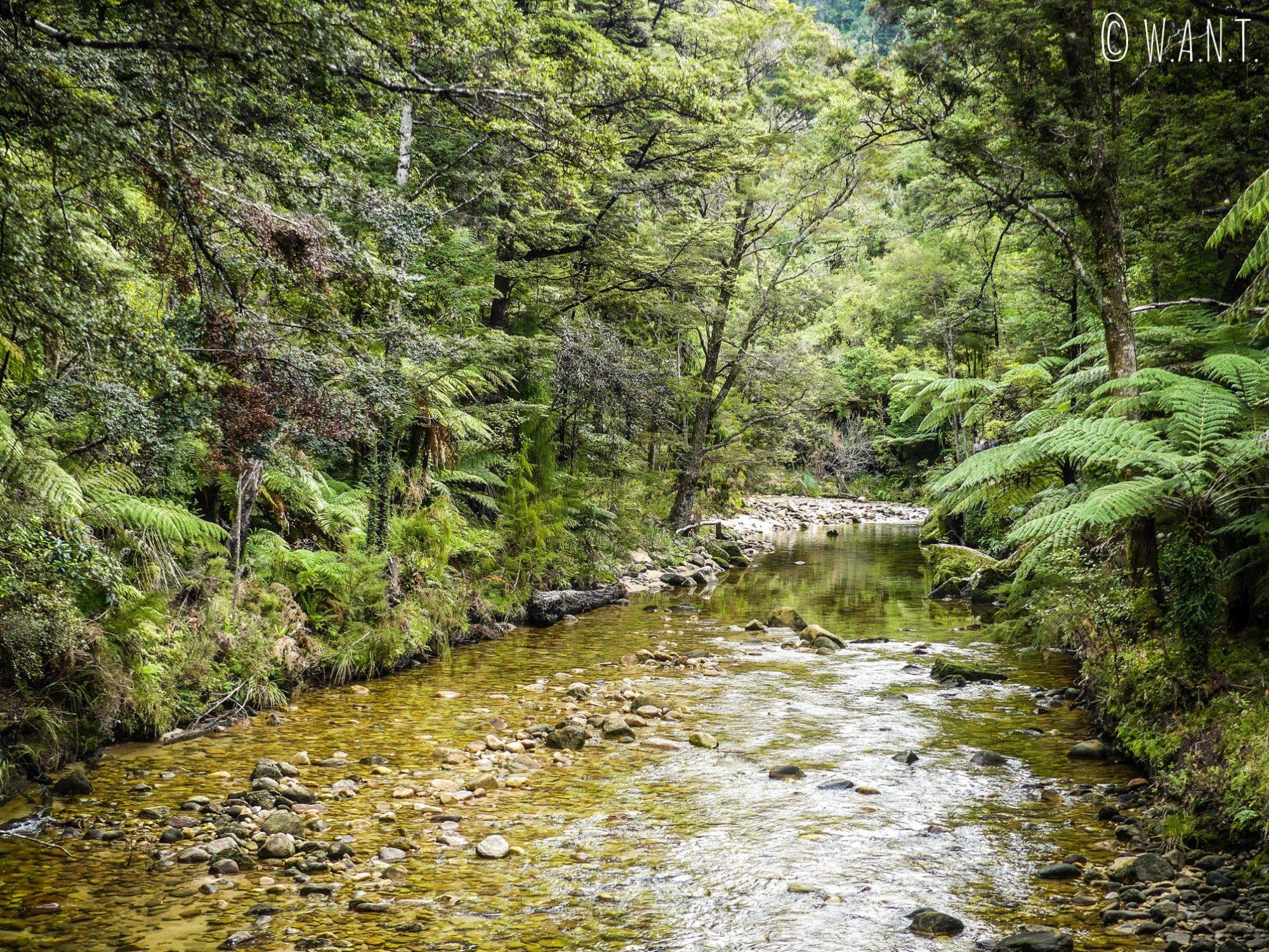 Rivière Torrent dans la parc national Abel Tasman en Nouvelle-Zélande