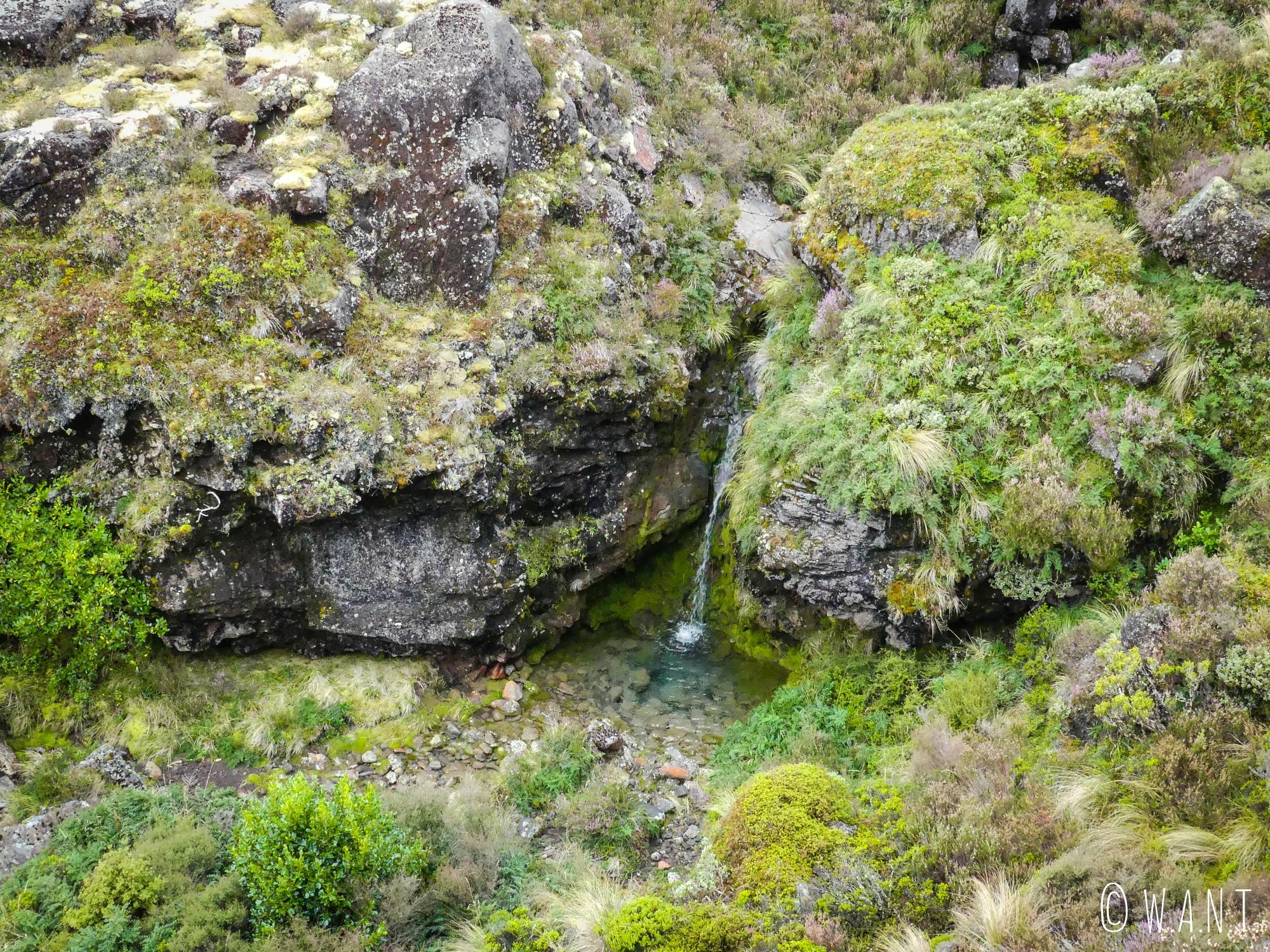 Végétation de la première partie de la randonnée « Tongariro Alpine Crossing » en Nouvelle-Zélande