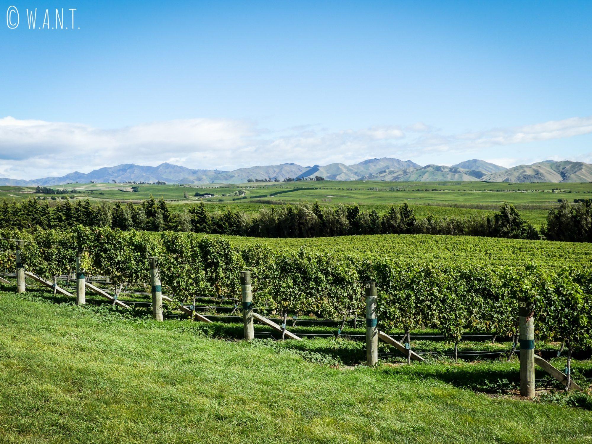 Vignes et montagnes au domaine Yealands dans la région de Malborough Sounds en Nouvelle-Zélande