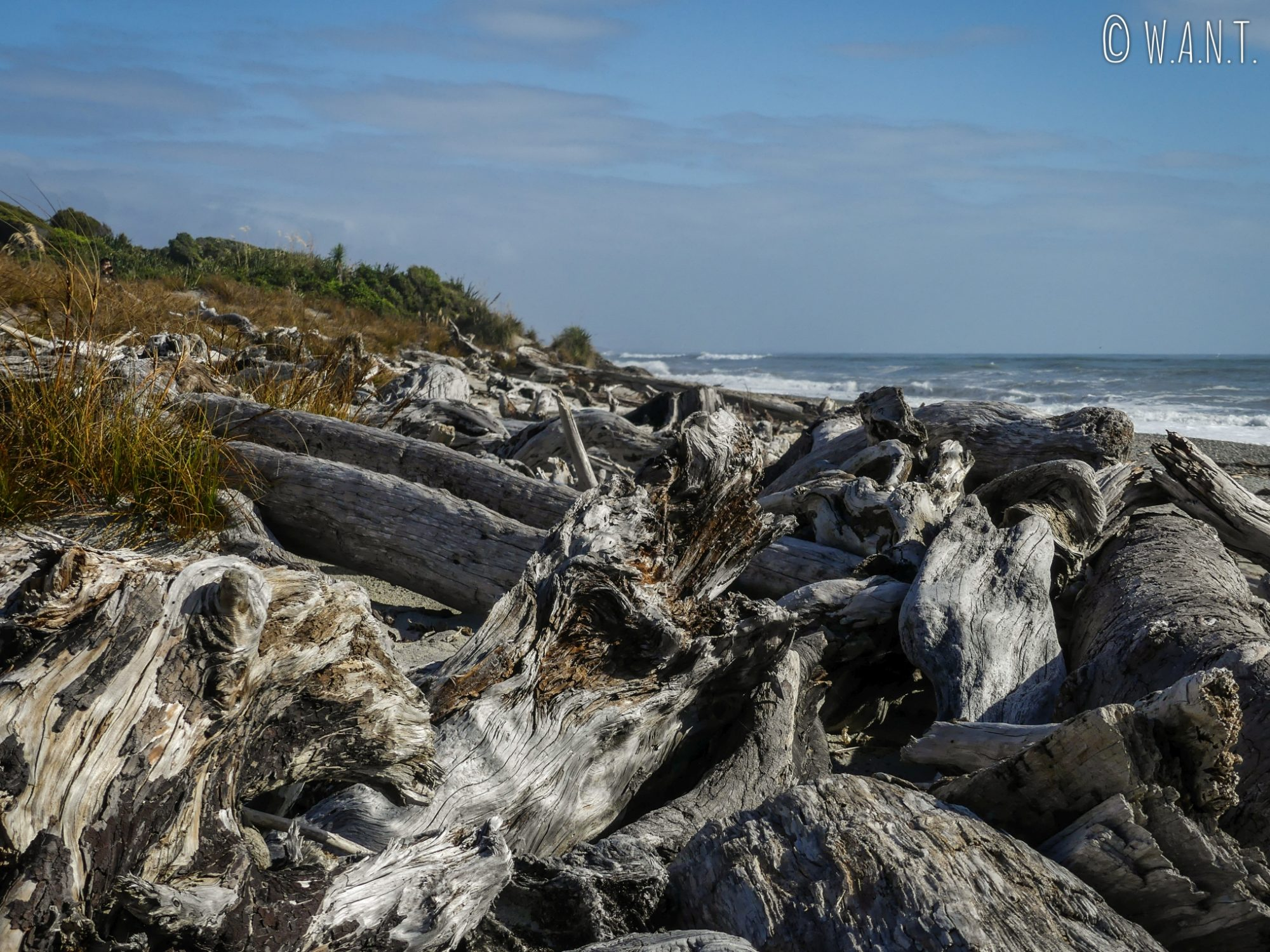 Bois flottant sur la plage de Ship Creek Beach entre les glaciers et Wanaka en Nouvelle-Zélande