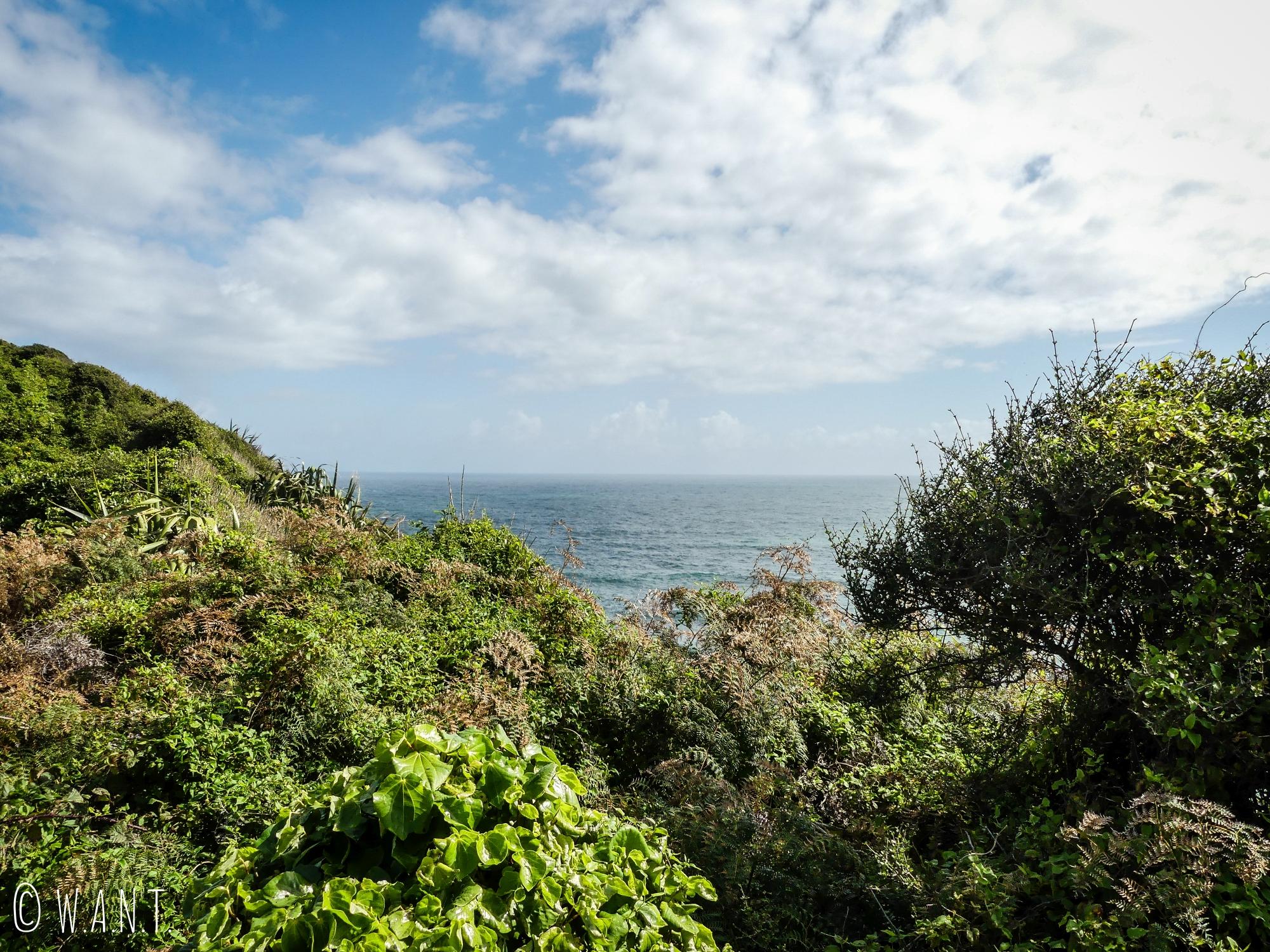 Végétation et mer au Cape Foulwind en Nouvelle-Zélande