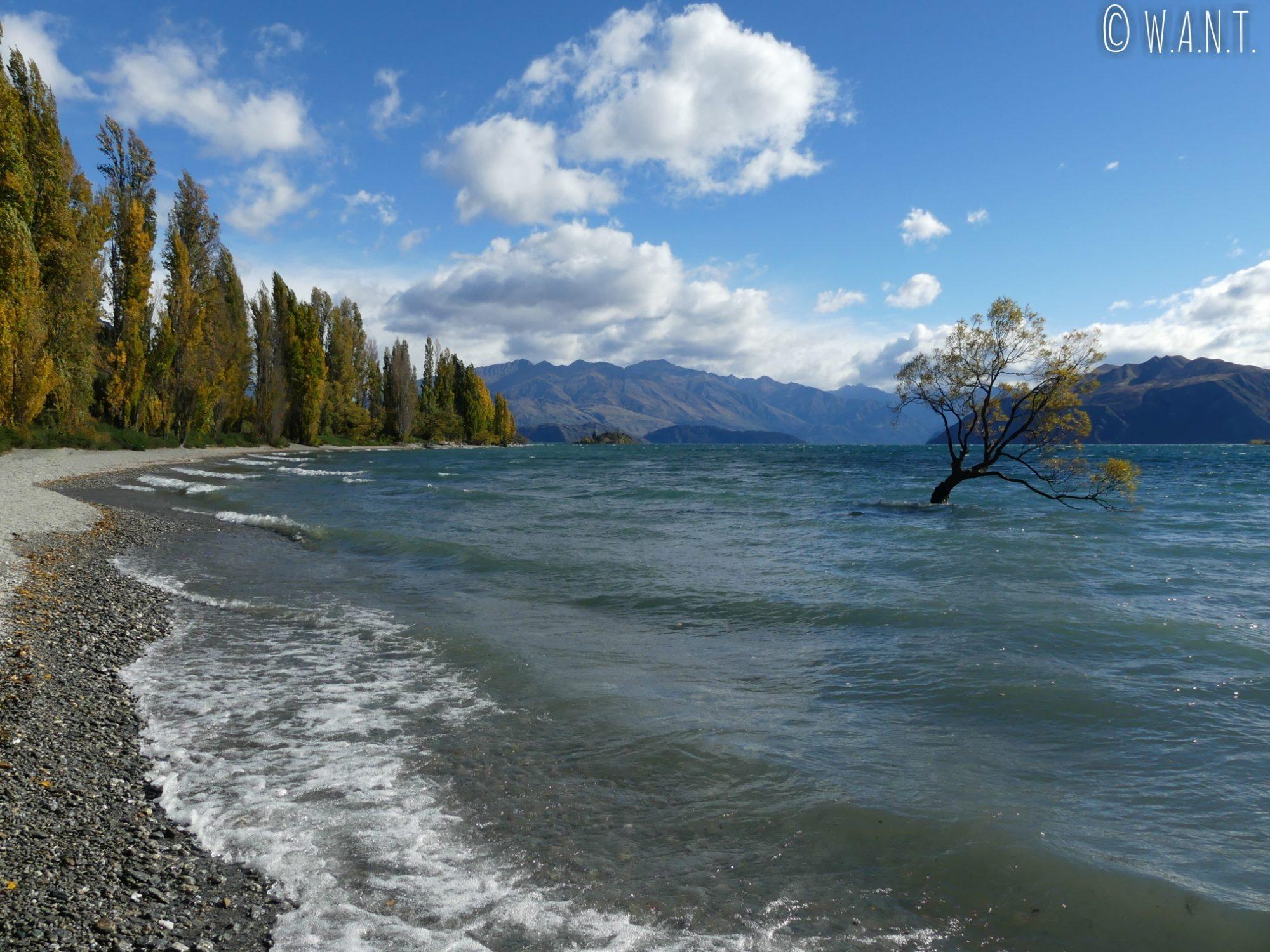 L'arbre de Wanaka est immergé dans les eaux du lac éponyme en Nouvelle-Zélande