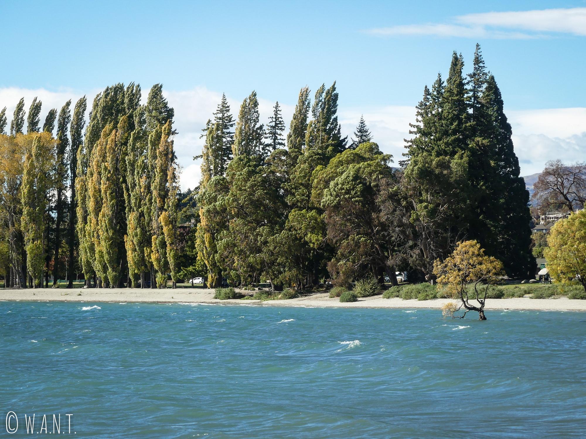 Vue sur l'arbre de Wanaka en Nouvelle-Zélande