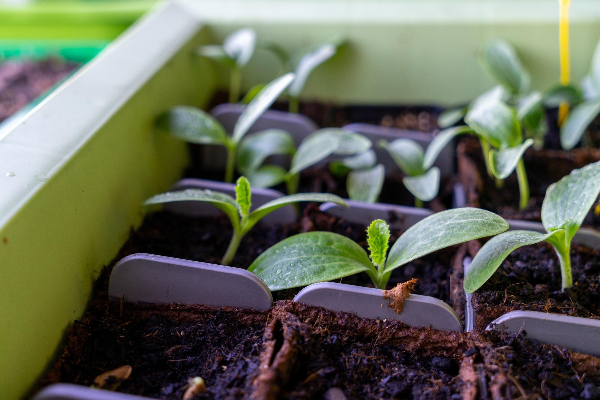 Morgane s'est lancé dans un projet de permaculture