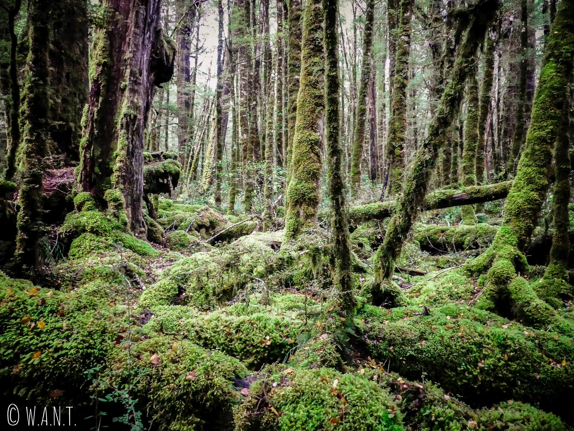 Benjamin se croirait dans la forêt de Fangorn durant notre randonnée au Gunn Lake en Nouvelle-Zélande