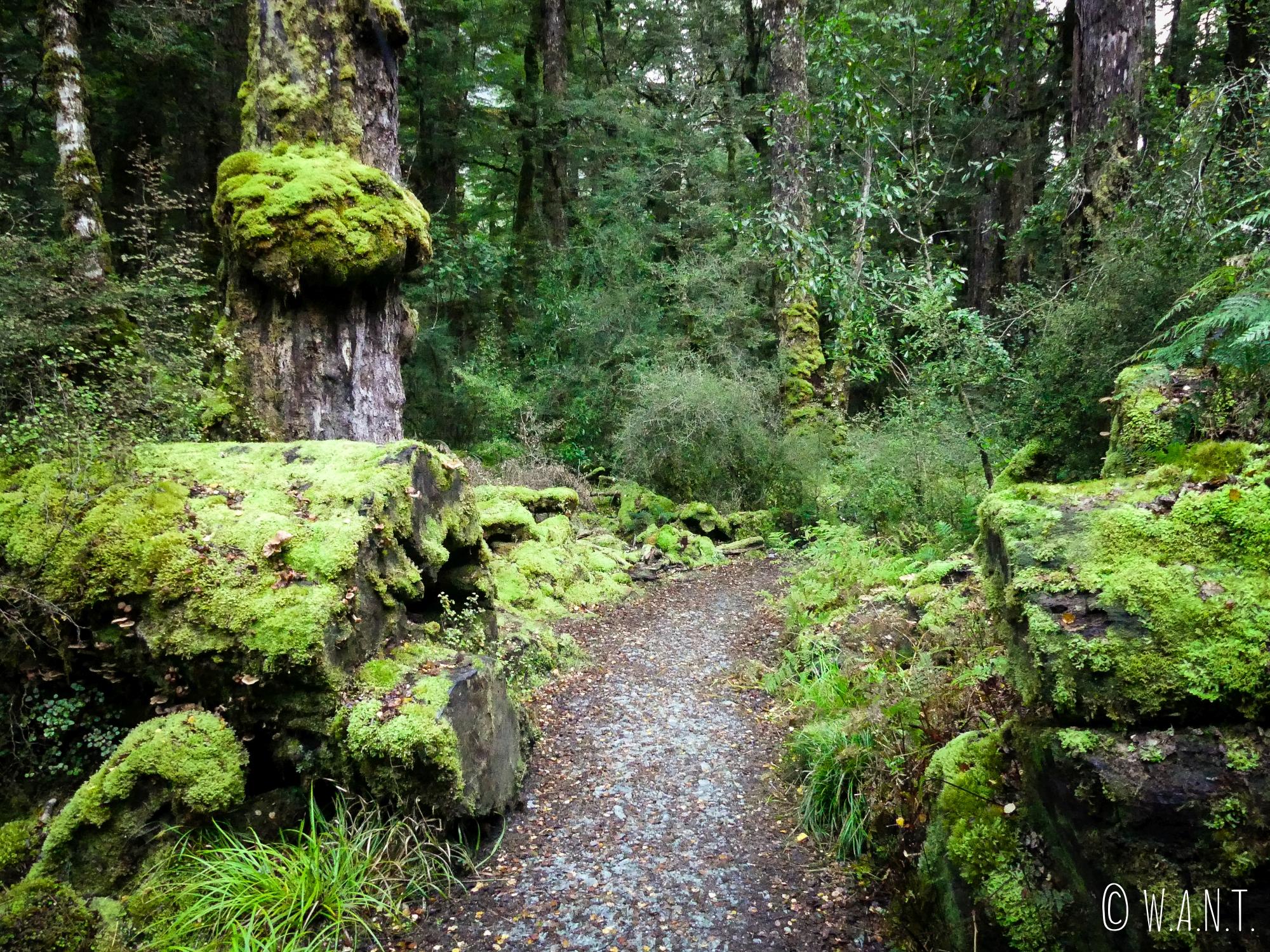 Chemin de la randonnée Gunn Lake dans le Fiordland National Park en Nouvelle-Zélande