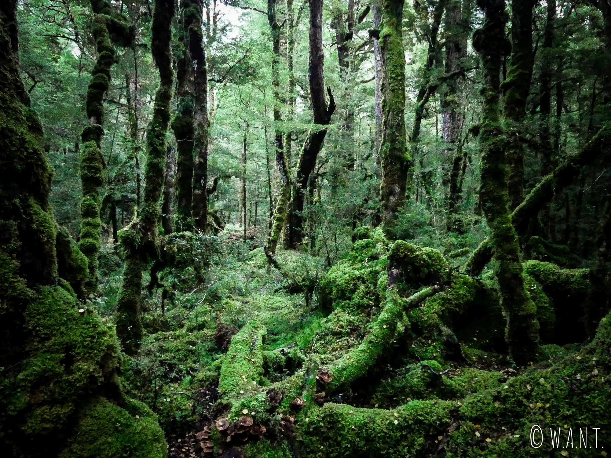 Forêt autour du Gunn Lake au petit matin en Nouvelle-Zélande