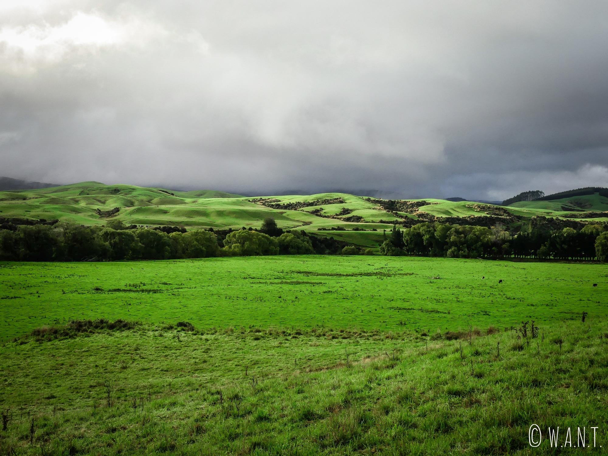 Prés d'un vert intense au bord de la Clifden Blackmount Road en Nouvelle-Zélande
