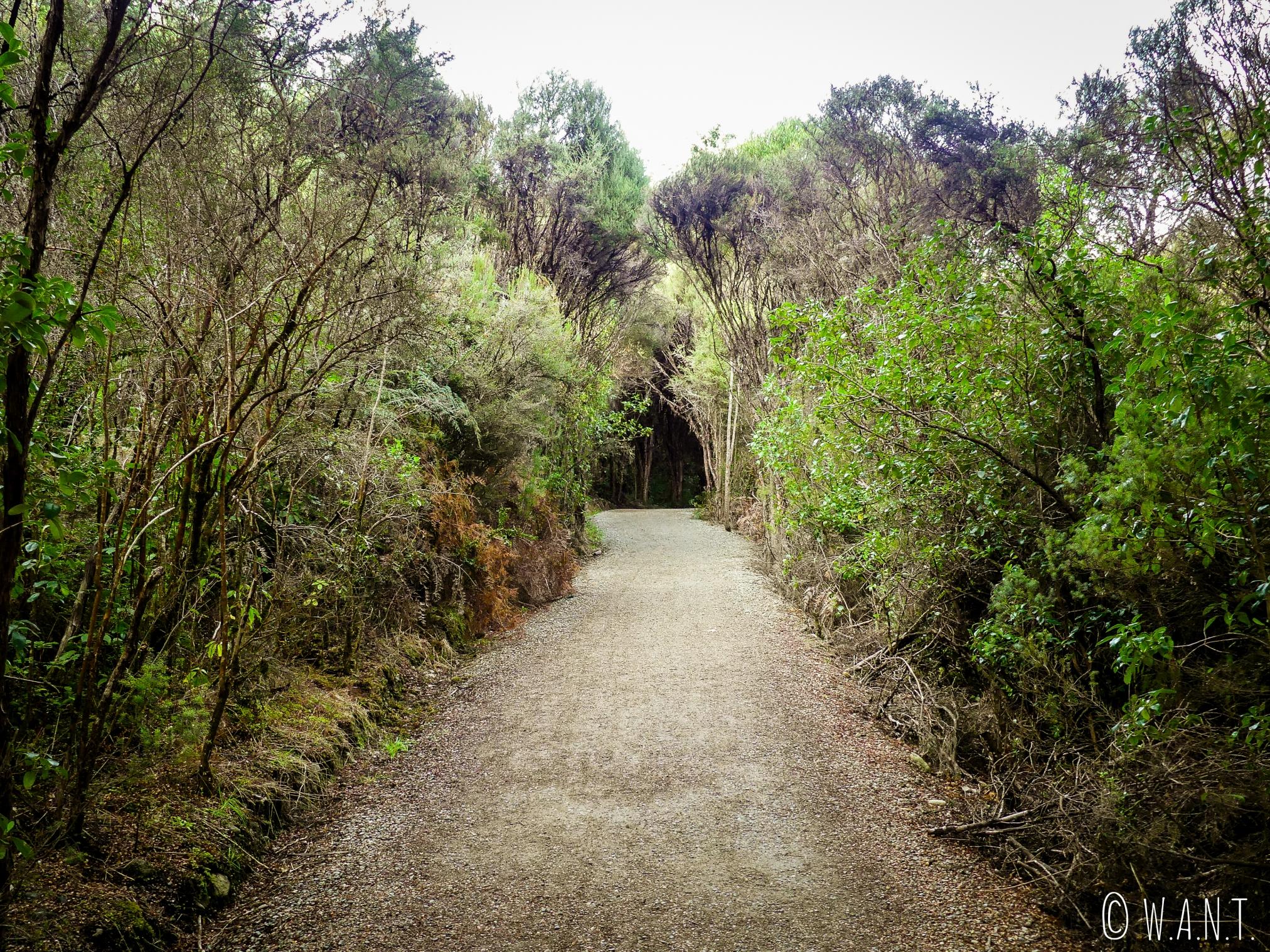 Promenade en sous-bois dans la ville de Te Anau en Nouvelle-Zélande