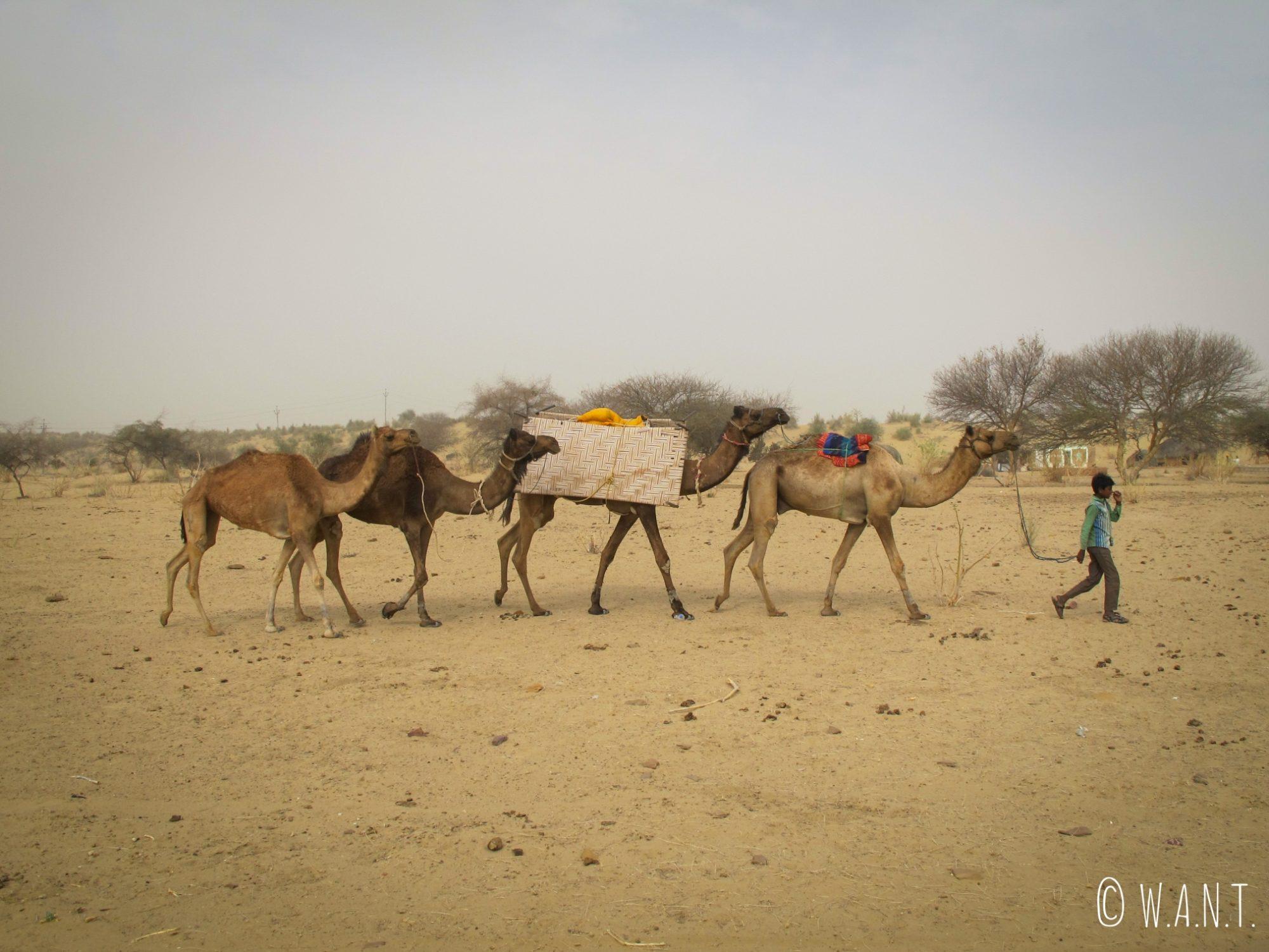 Caravane conduite par le frère d'Harkha, notre chamelier durant notre safari dans le désert du Thar