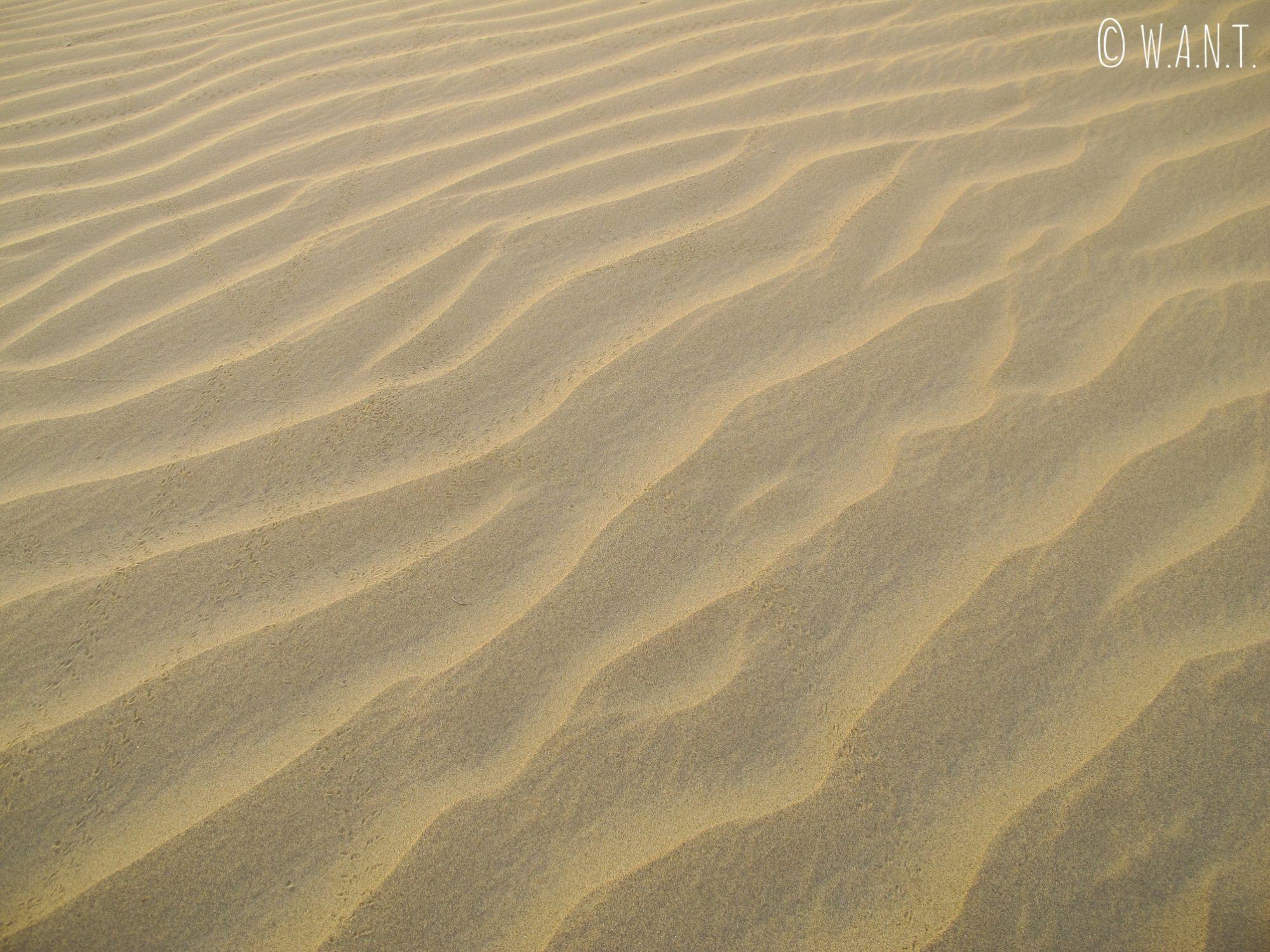 Les dunes du désert du Thar