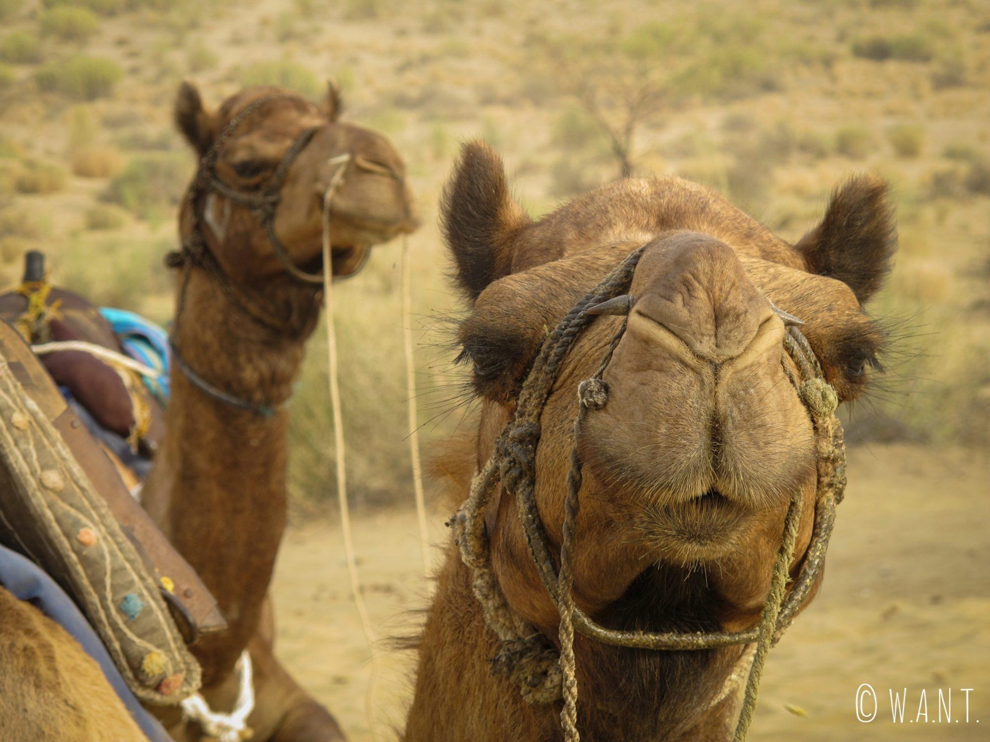 Papu et ses 6 congénères auront pris autant de plaisir que nous à s'aventurer dans le désert du Thar