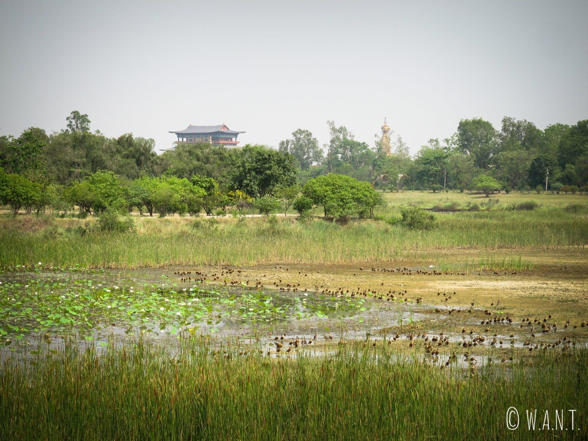 La faune et la flore est très developpée autour des temples et monastères du parc de Lumbini