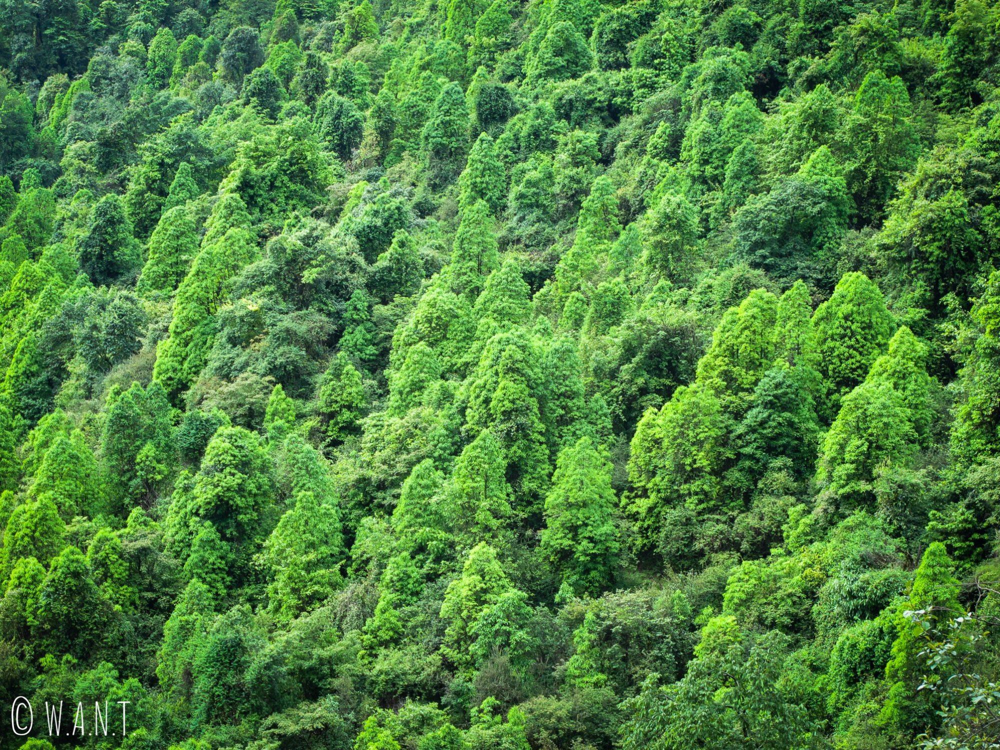 La jungle occupe une grande partie des montagnes dans le sanctuaire des Annapurnas