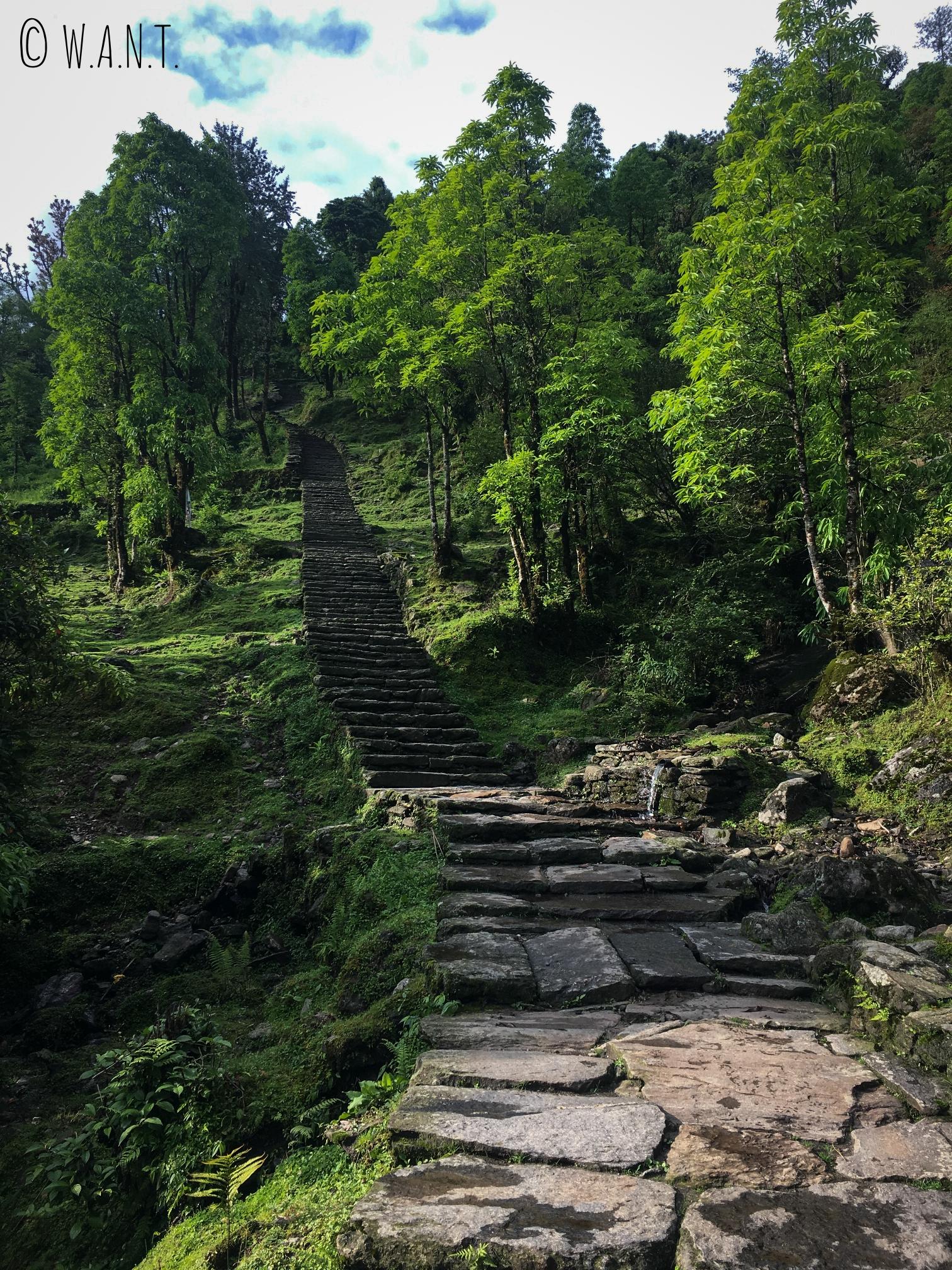 Le santuaire des Annapurnas est parsemé de marches de tout son long, et cela est parfois très décourageant !