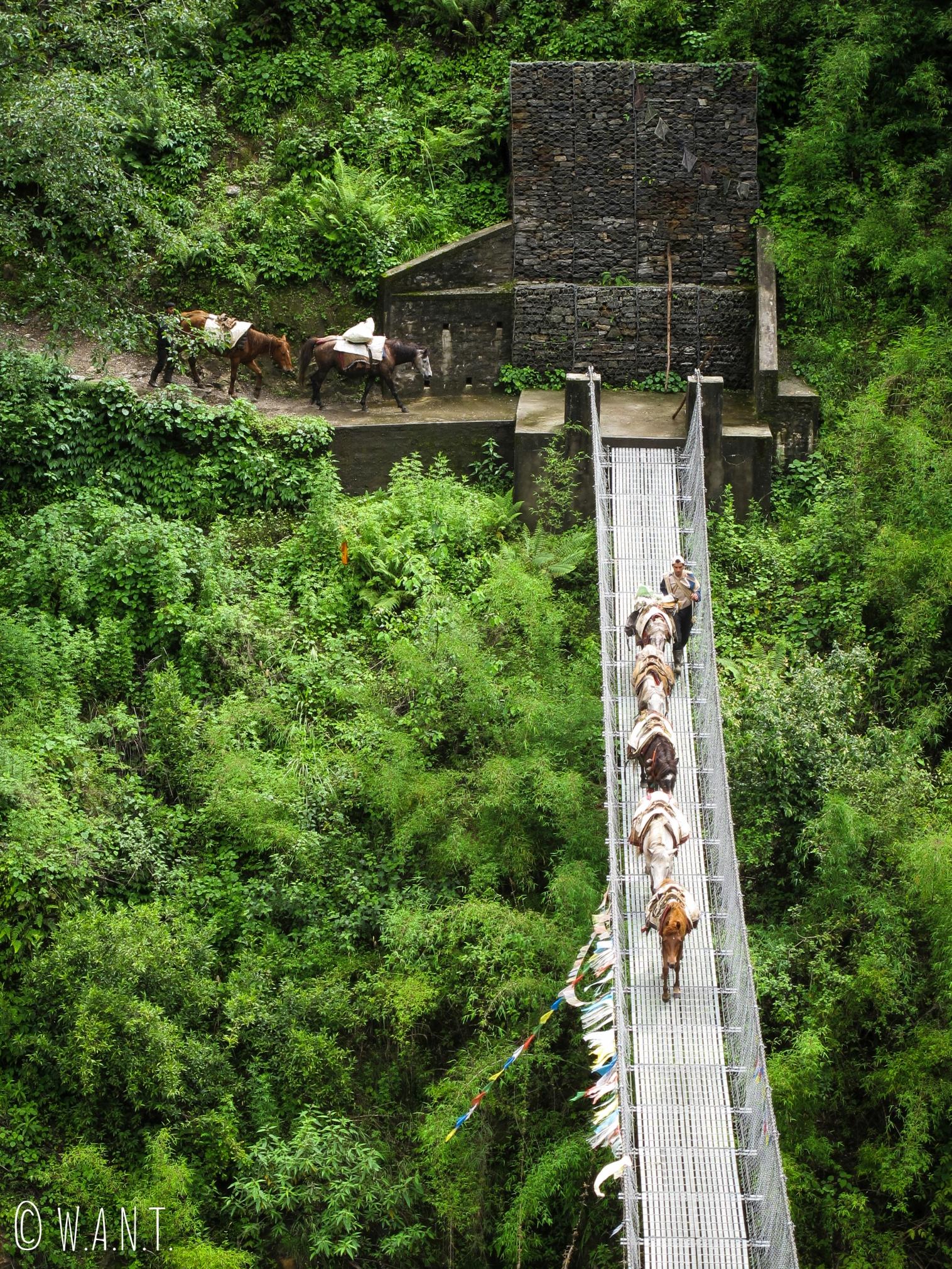 Une caravane d'ânes traverse un pont suspendu