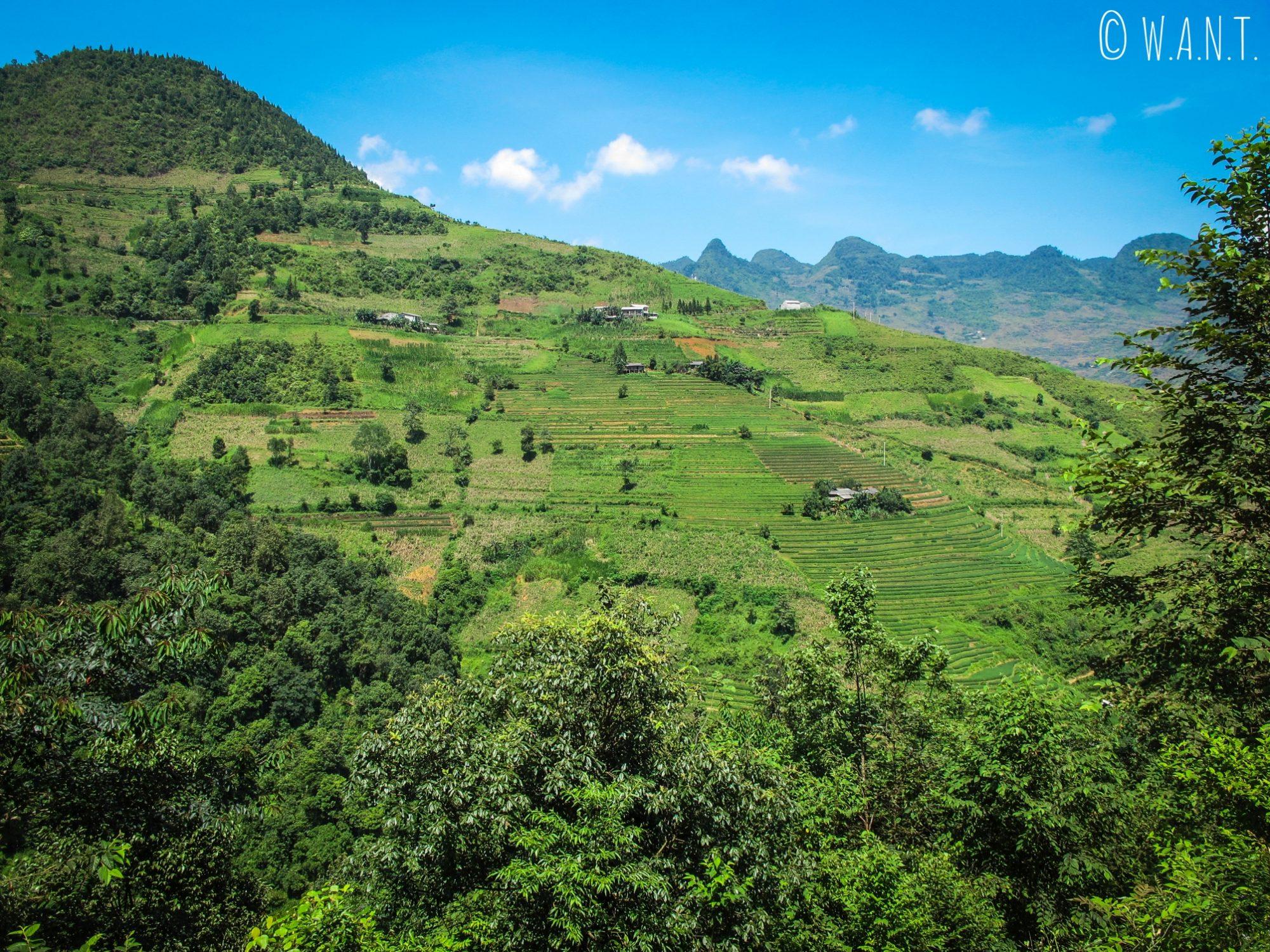 Culture en terrasses dans la région de Meo Vac